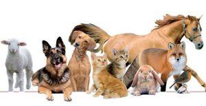 animali-1-300x155 animali