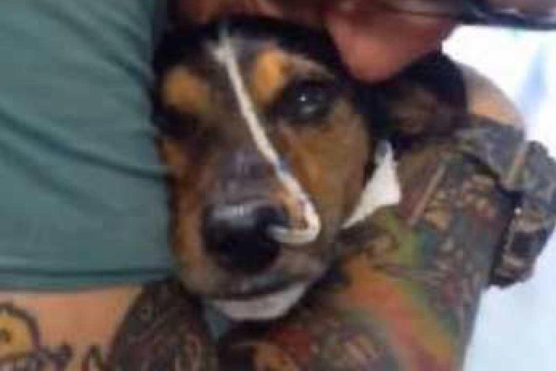 5a04761347797be9af4bc4f088e4437a_sansone-1140-760-c-54 100 ottimi motivi per iscriversi all'Associazione Nazionale Jack Russell Terrier Italia!