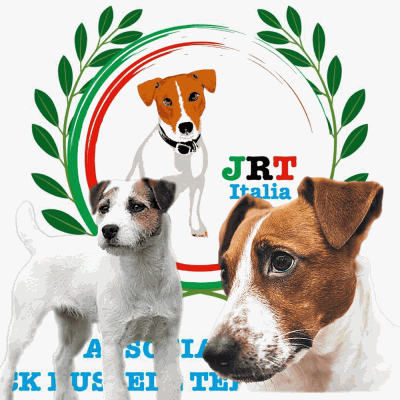 8aae43e0d3c718fcb1307ee088d90602_Lo-Standard-del-Jack-Russell-Terrier-400-400-c-54 Home